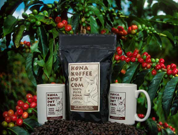 Kona Coffee Trees